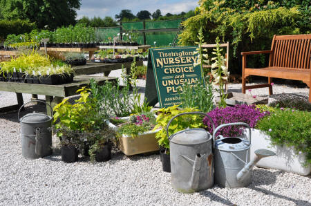 Tissington Nursery is a treasure trove of interesting and unusual plants