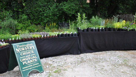 A brilliant display of plants from Tissington Nursery